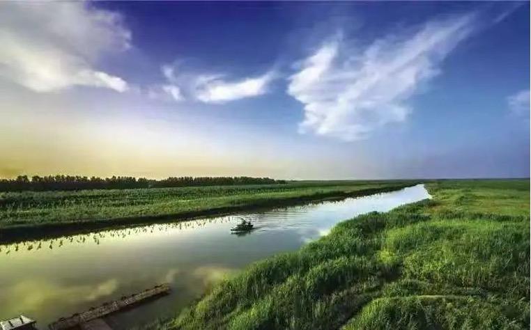 """西洞庭湖自然保护区:杨树""""除萌""""累计完成8万亩"""